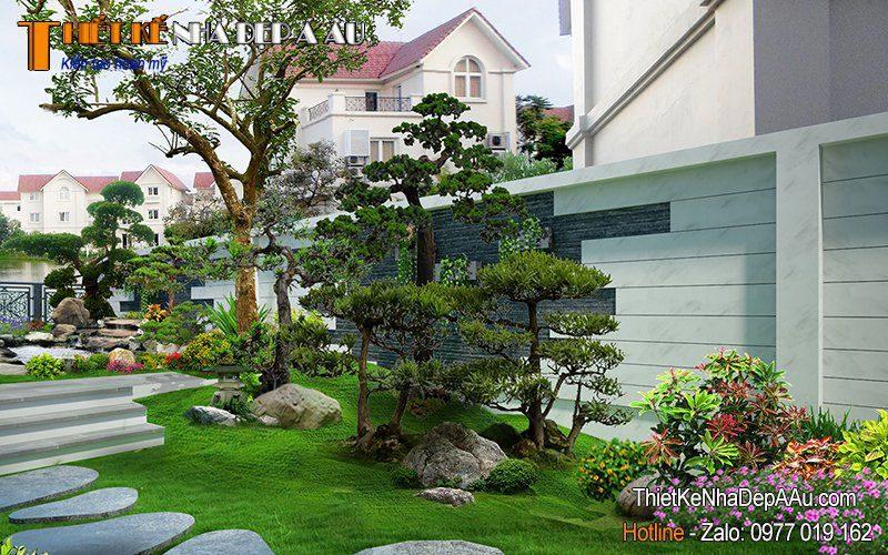 những cây tùng la hán được trồng trong vườn