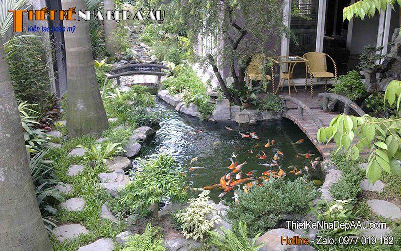 hồ cá Koi trong sân vườn nhà