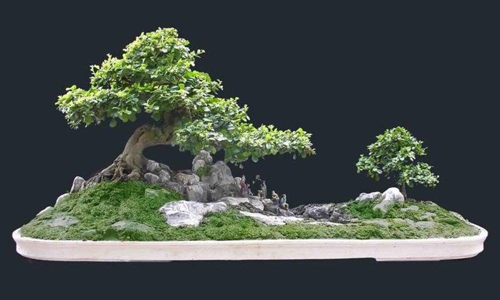 chậu cây bonsai mini đẹp