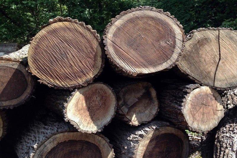 thân gỗ
